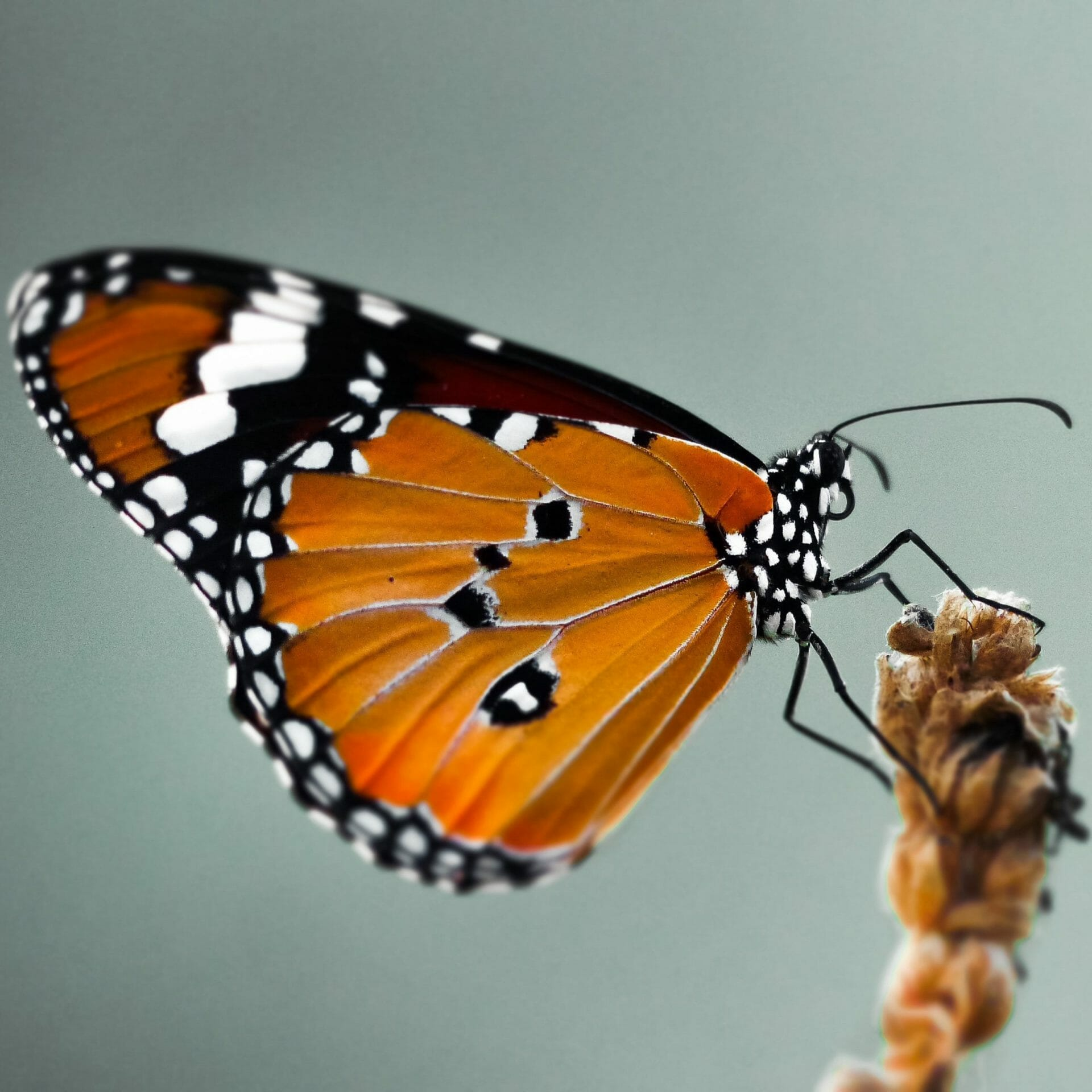 Macro Photography: A Beginner's Guide