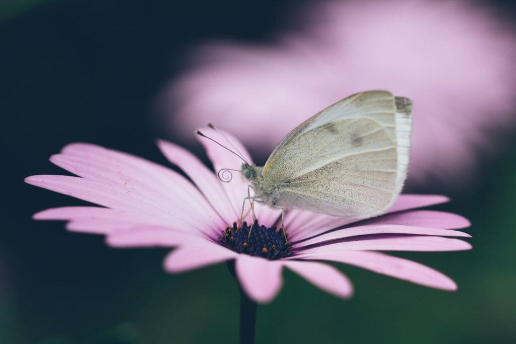 Liven Up Your Pictures With Butterflies, Bugs, or Water Droplets