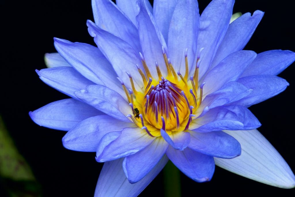 What is Macro Photography?