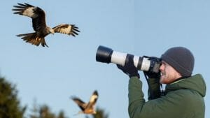 How to Take Great Photos of Birds (7 Great Tips)